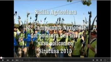 News Olivicoltura 13 Campionato Nazionale Potatura Olivo Video