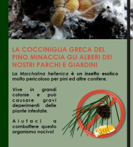 "Information sheet on the Cocciniglia greca del Pino ""Marchalina hellenica"""